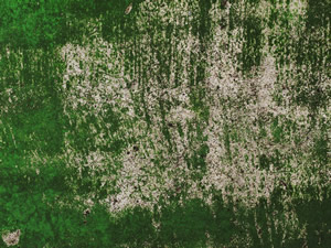 苔、藻、カビ