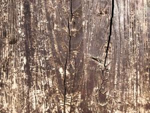 木部の劣化